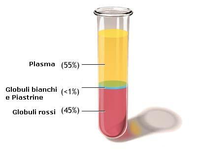 Composizione del sangue: 55% plasma, 45% globuli rossi, meno dell'1% globuli bianchi e piastrine